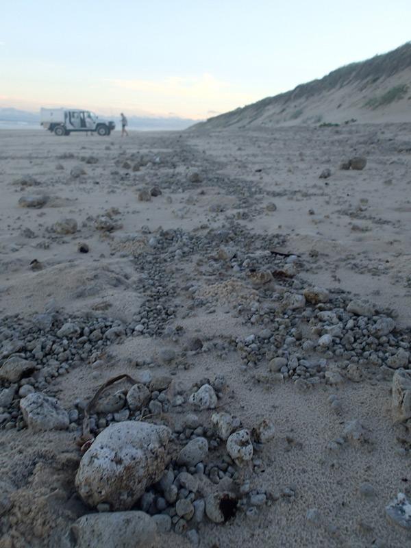 playa de Moreton island