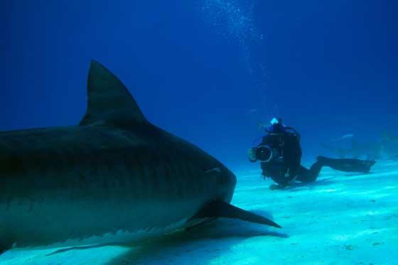Madison Stewart, filmando un tiburón