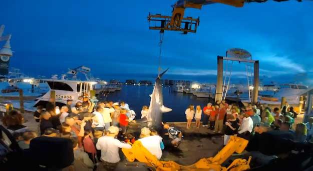 tiburón mako pescado en Florida,  descarga