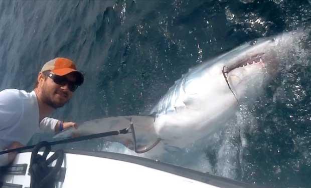 tiburón mako pescado en Florida