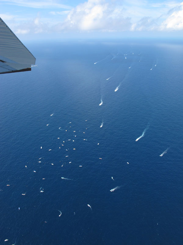 agregación de tiburones ballena en Quintana Roo, México