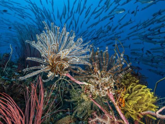 arrecife de coral sano en Fiji