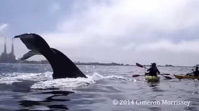 ballena cerca de un kayak