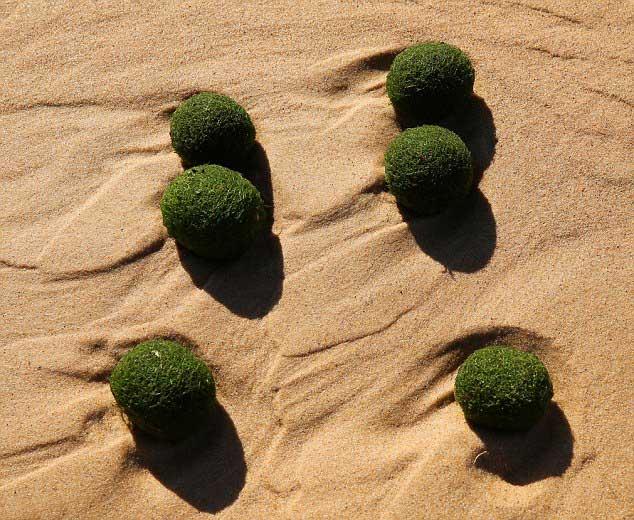 bolas verdes alien en playa de Sydney