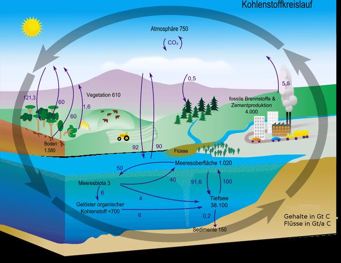 ciclo del carbono en alemán