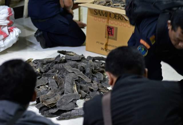 comercio de branquias de manta rayas en Indonesia
