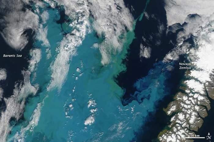 floración de fitoplancton en el Océano Ártico