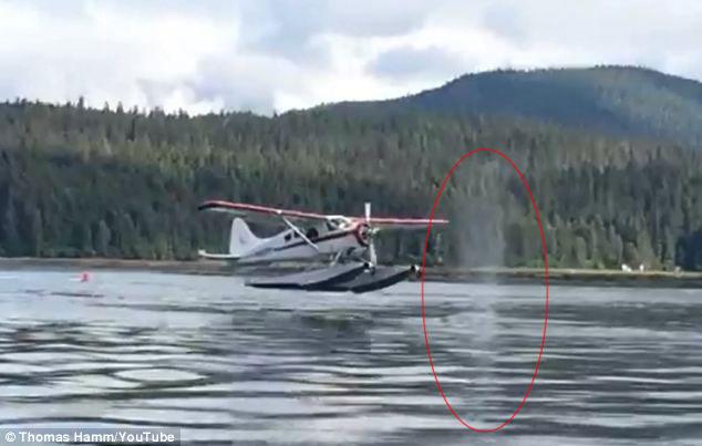 hidroavión a punto de chocar con una ballena