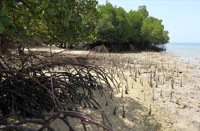 manglares costeros