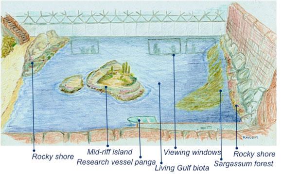 océano en Biosfera-2