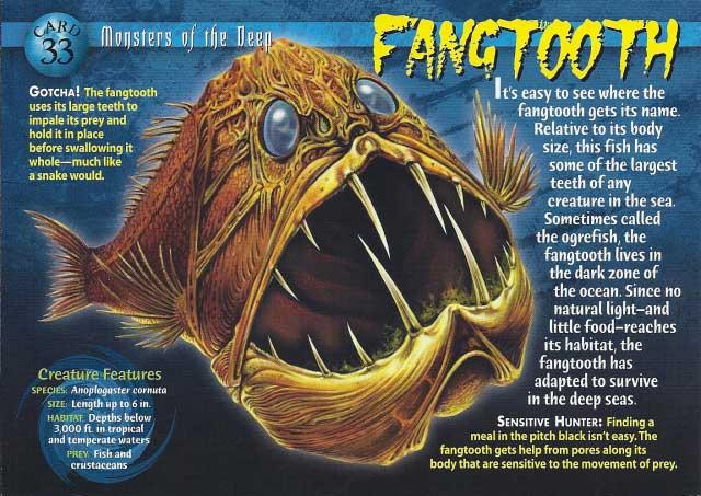 pez de colmillos largos (Anoplogaster cornuta) cartel