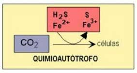 proceso quimioautótrofo
