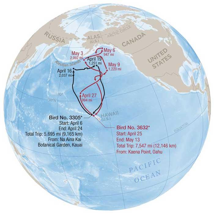 recorridos de albatros en busca de comida