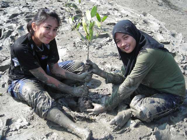 replantación de manglares en Filipinas