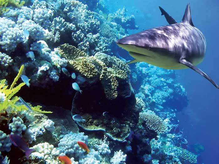 tiburones y acidificación del océano