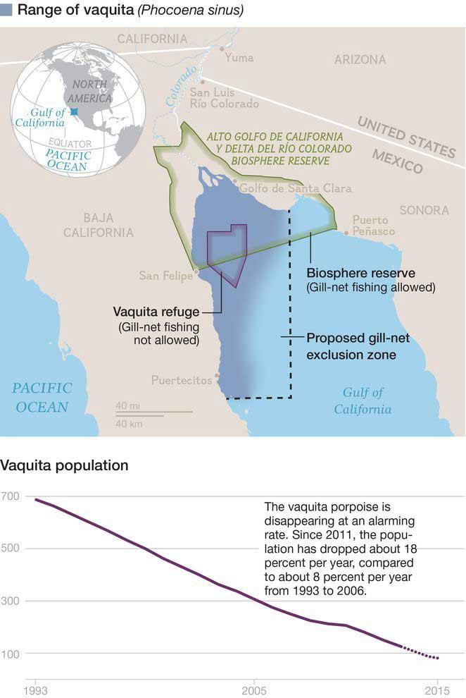 vaquita marina área de distribución y números