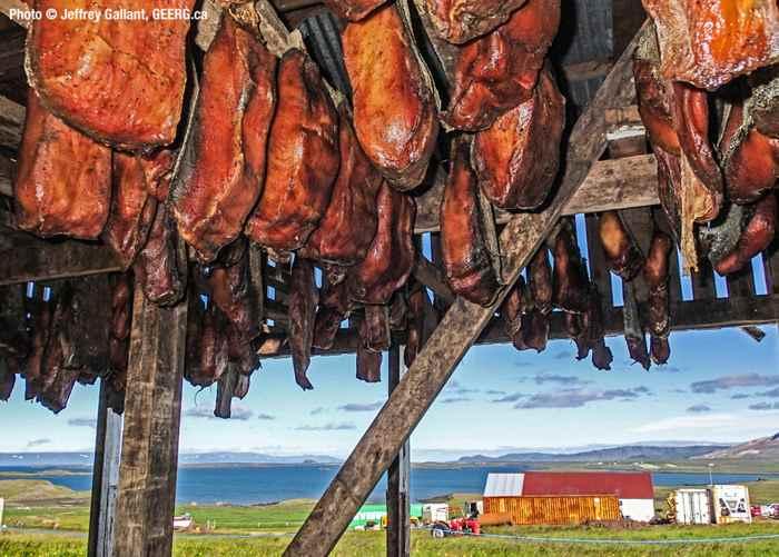 carne de tiburón de Groenlandia