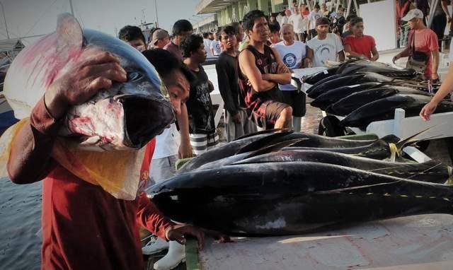 descarga de atún en la lonja de General Santos City