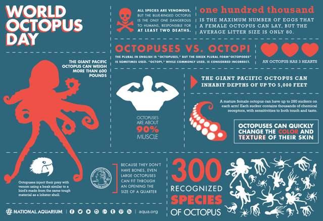 Día Internacional del Pulpo, infografía