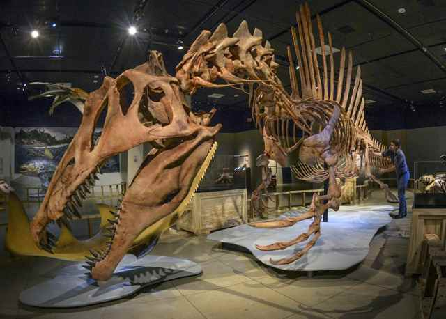 esqueleto de Spinosaurus
