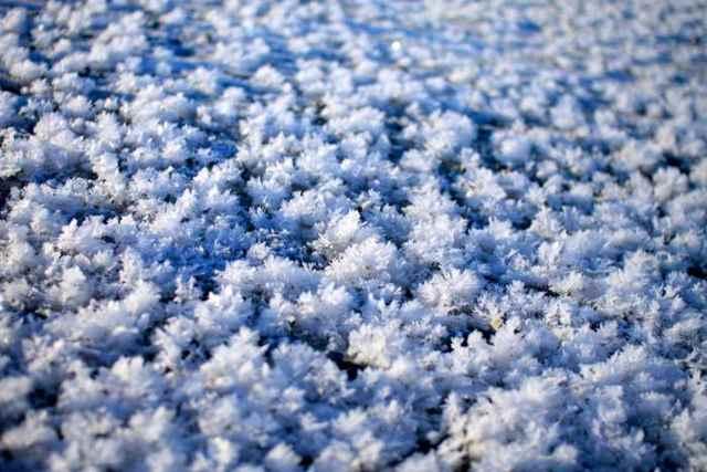 flores de escarcha en el hielo marino