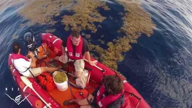Investigación en el Mar de los Sargazos (MBARI)