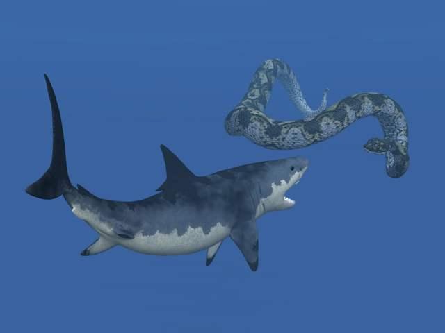 tiburón Megalodon, ilustración
