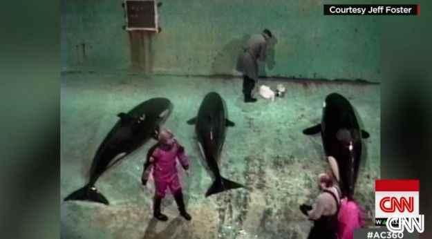 Ex cazador de orcas Jeff Foster