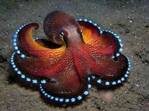 pulpo con tentáculos luminiscentes
