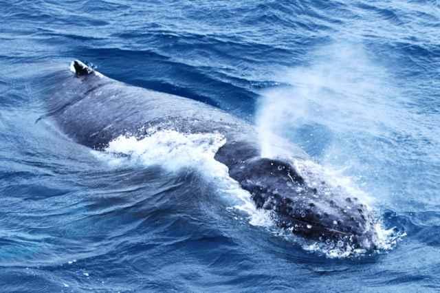 respiración de una ballena