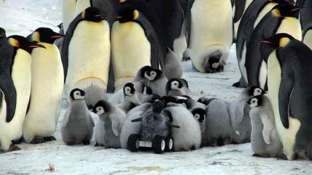 rover disfrazado de bebé pingüino en un guardería
