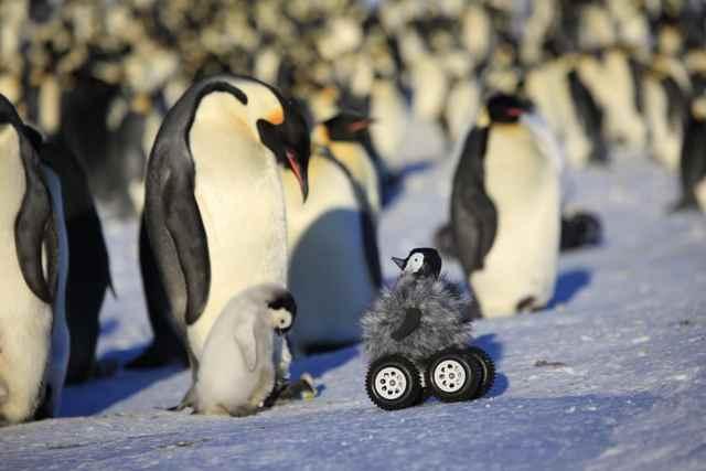 rover disfrazado de bebé pingüino
