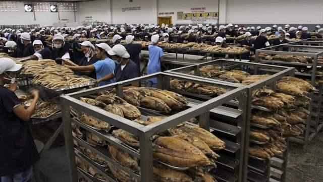 trabajadoras en una fábrica de conserva de atún en Filipinas
