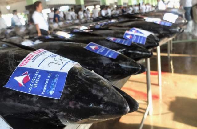 venta de atún en la lonja de General Santos City