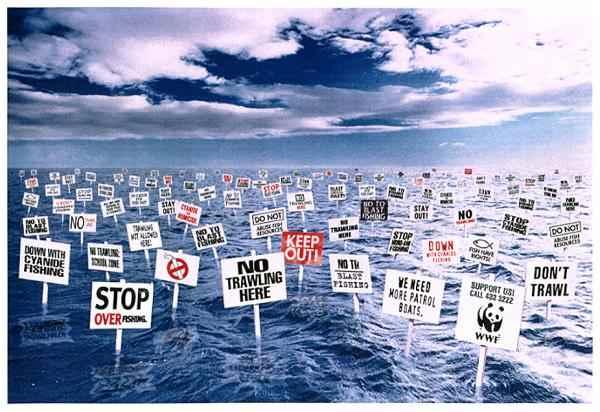 alto a la pesca ilegal