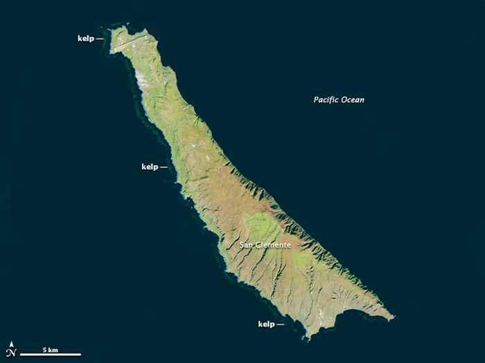 bosques de algas en la isla de San clemente 23-12-2013