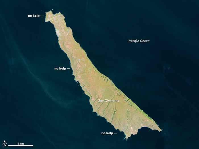 bosques de algas en la isla de San clemente 29-03-2014