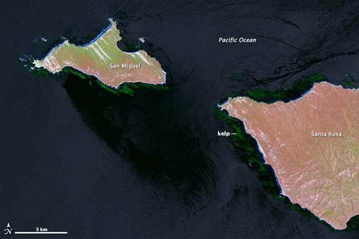bosques de algas en las Islas del Canal, California - infrarrojo
