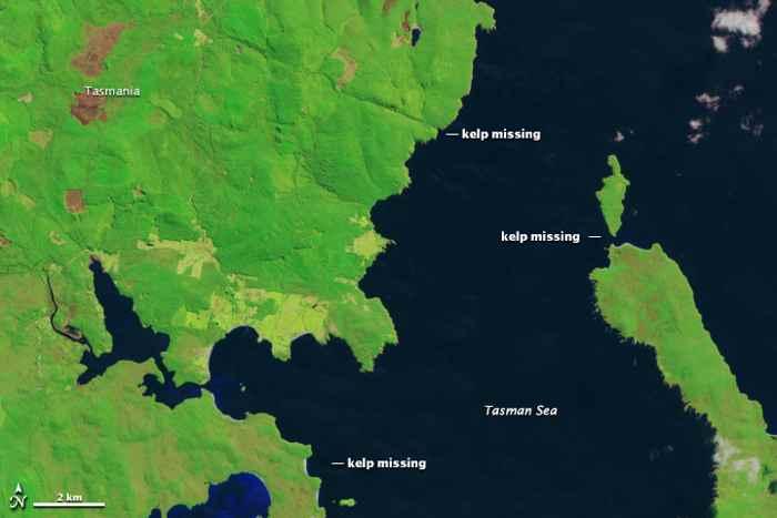 bosques de algas gigantes en Tasmania 28-09-2014