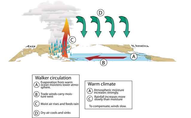 circulación de los vientos en el Pacífico