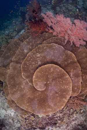 detalle de un coral