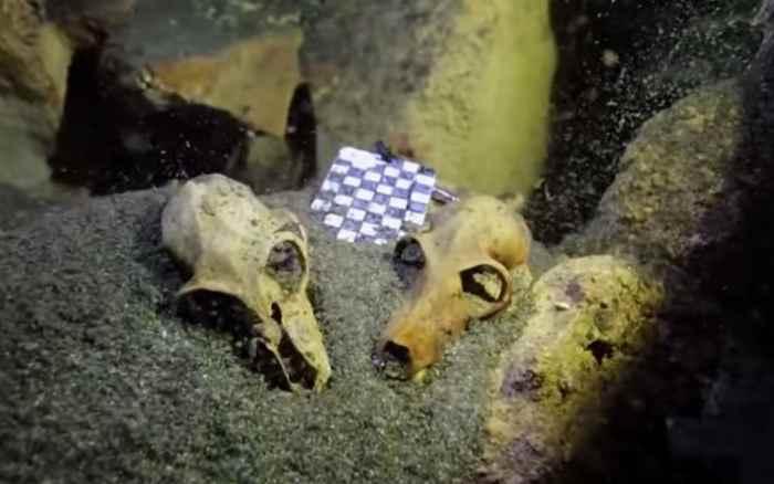 cráneos de lemur en una cueva submarina de Madagascar