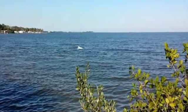 delfín albino avistado en Florida