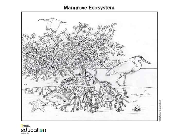 ecosistema de un bosque de manglares