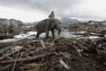 elefante ayuda a la limpieza tras el tsunami en Indonesia