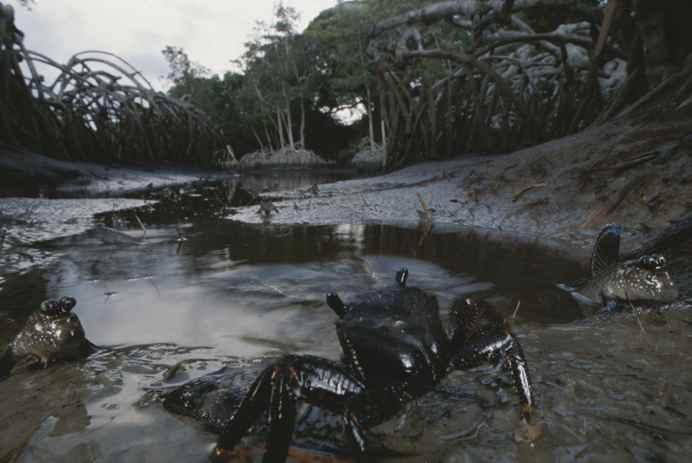 especies marinas contaminadas por petróleo