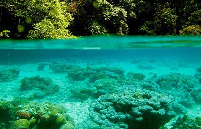 arrecifes de corales en aguas superficiales