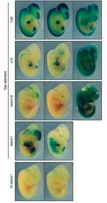 experimento en ratones transgénicos