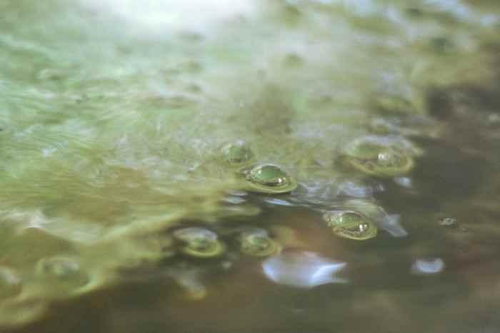 fitoplancton en el agua