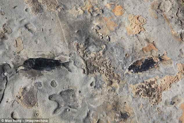 fósiles de peces del Triásico
